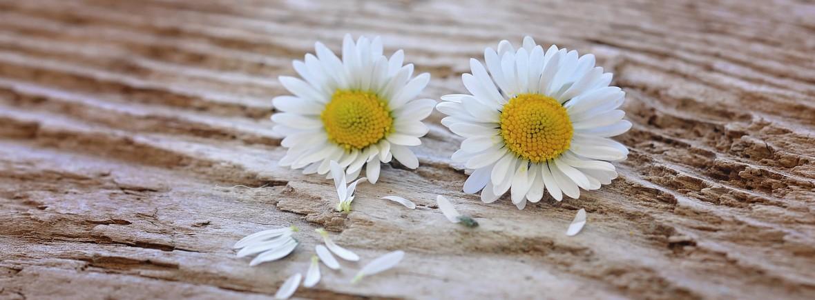 flowers-747345_1920